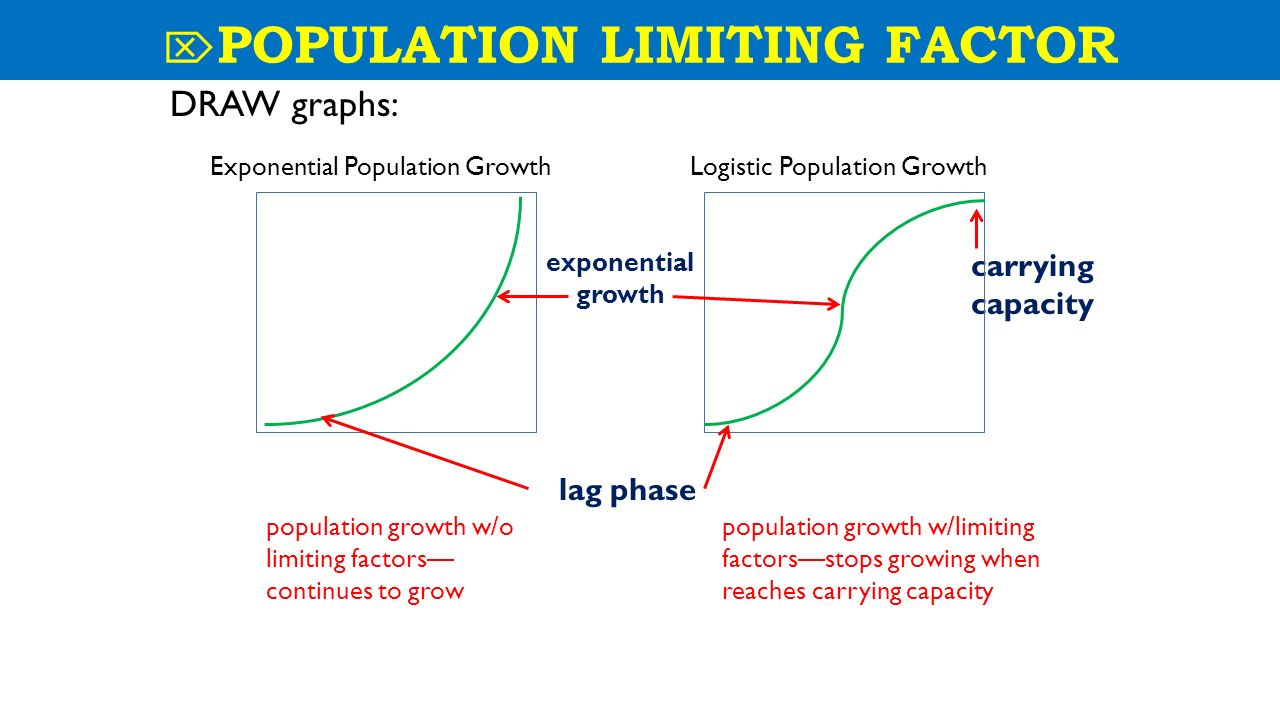 Exponential growth biology