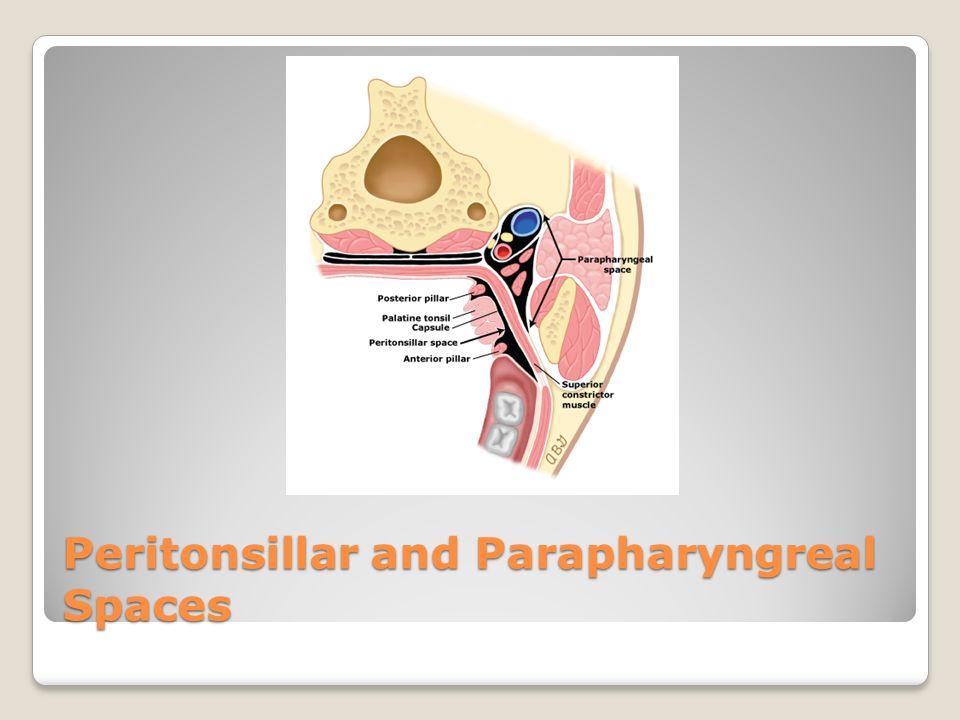 Dorable Parapharyngeal Space Anatomy Adornment - Anatomy Ideas ...