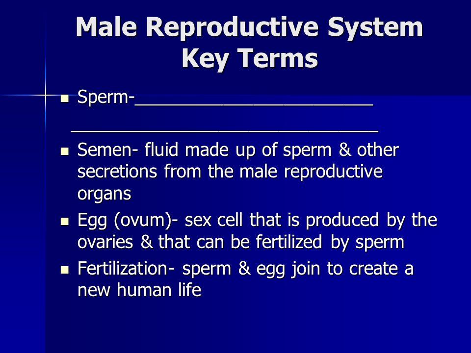 Male Reproductive System Key Terms Sperm-________________________ Sperm-________________________ _______________________________ _____________________