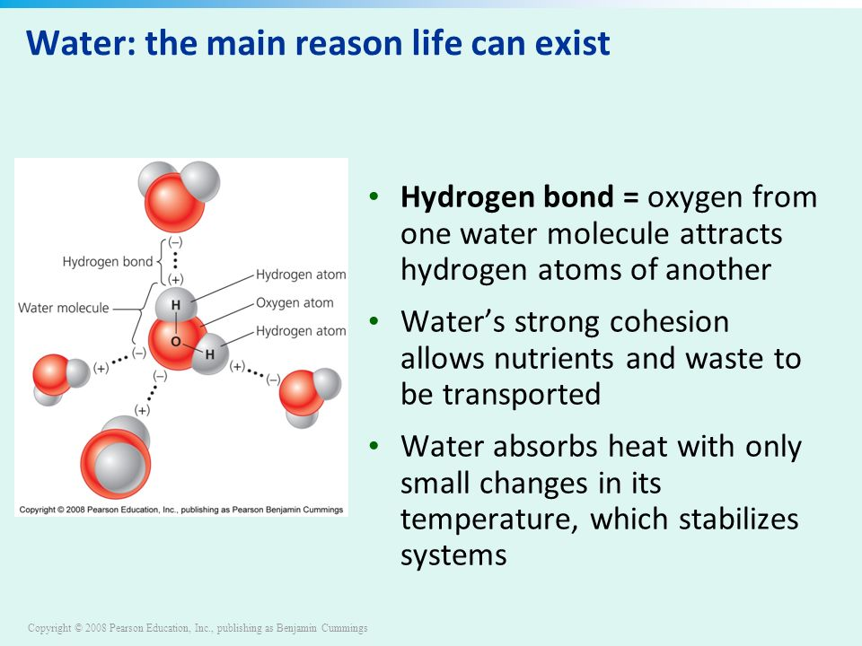 Copyright © 2008 Pearson Education, Inc., publishing as Benjamin Cummings Water: the main reason life can exist Hydrogen bond = oxygen from one water molecule attracts hydrogen atoms of another Water's strong cohesion allows nutrients and waste to be transported Water absorbs heat with only small changes in its temperature, which stabilizes systems