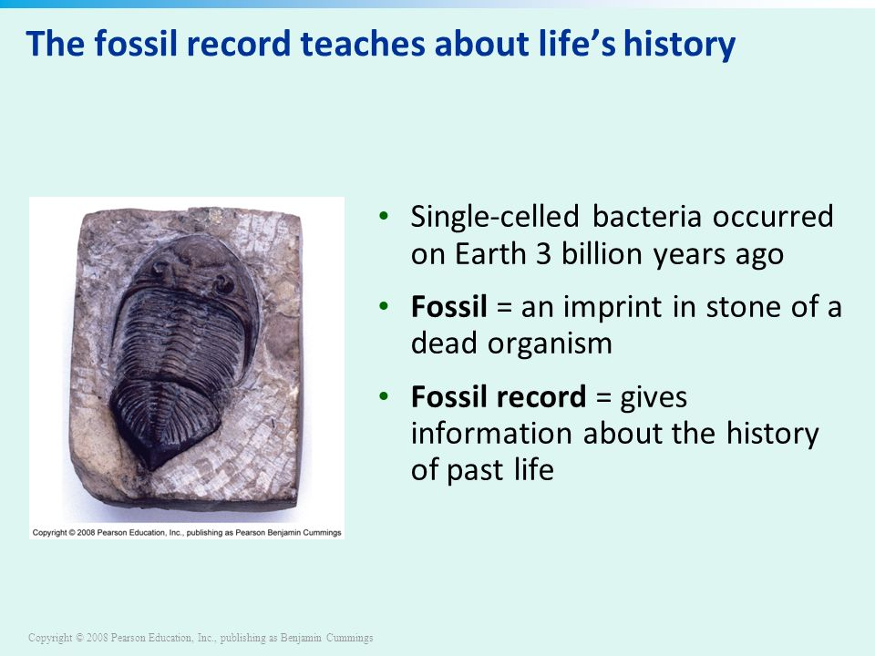 Copyright © 2008 Pearson Education, Inc., publishing as Benjamin Cummings The fossil record teaches about life's history Single-celled bacteria occurred on Earth 3 billion years ago Fossil = an imprint in stone of a dead organism Fossil record = gives information about the history of past life