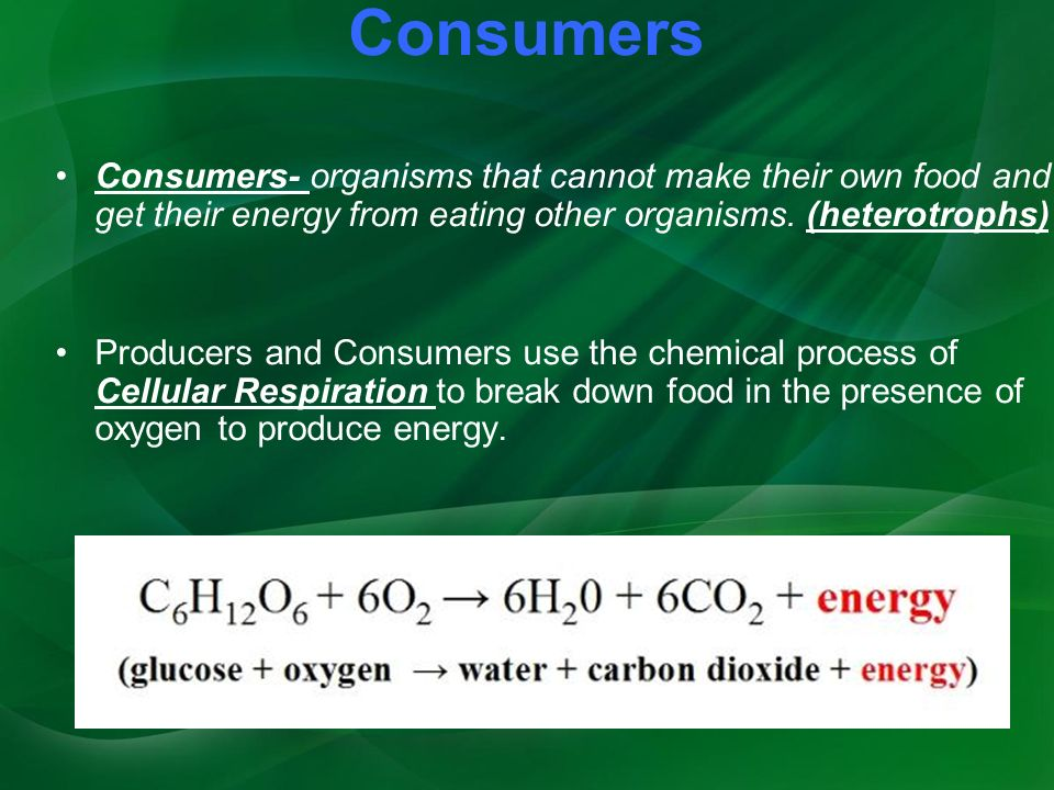 Consumers Consumers- organisms that cannot make their own food and get their energy from eating other organisms.