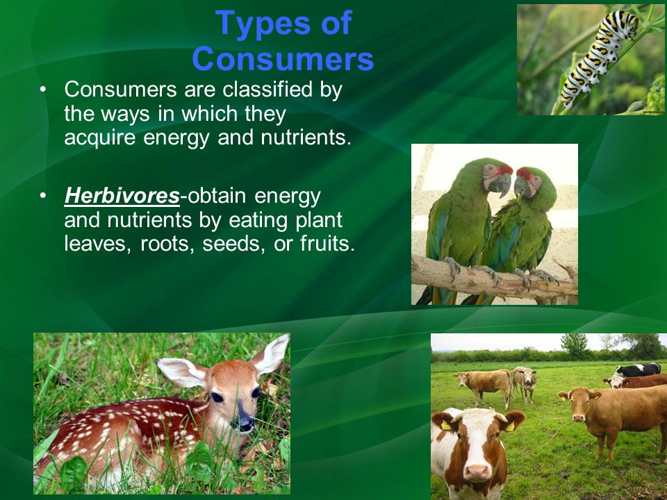 Types of Consumers Consumers are classified by the ways in which they acquire energy and nutrients.