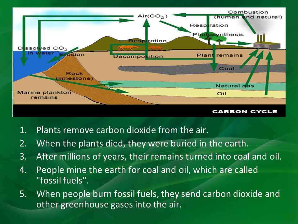 1.Plants remove carbon dioxide from the air. 2.When the plants died, they were buried in the earth.
