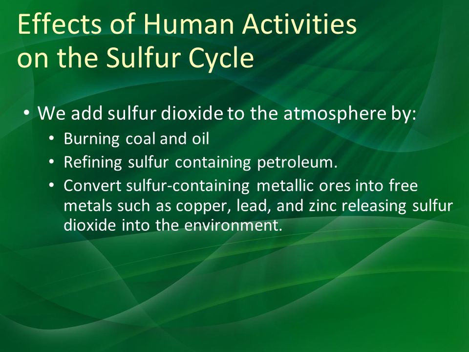 Effects of Human Activities on the Sulfur Cycle We add sulfur dioxide to the atmosphere by: Burning coal and oil Refining sulfur containing petroleum.