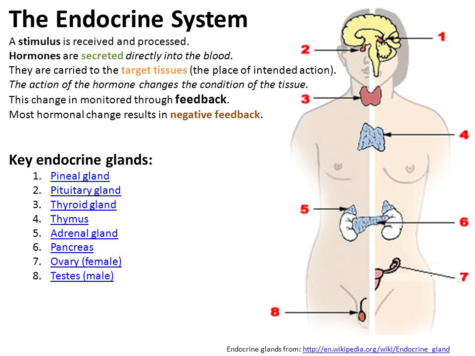The Endocrine System A stimulus is received and processed.