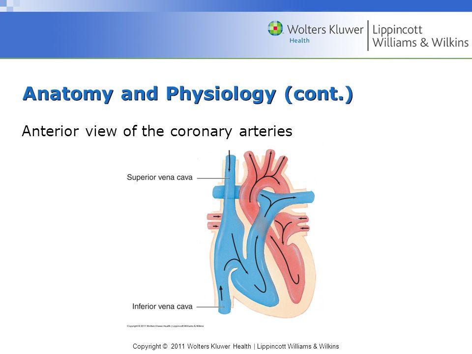 Beste Anatomie Der Bewegungsübung Bilder - Anatomie Ideen - finotti.info