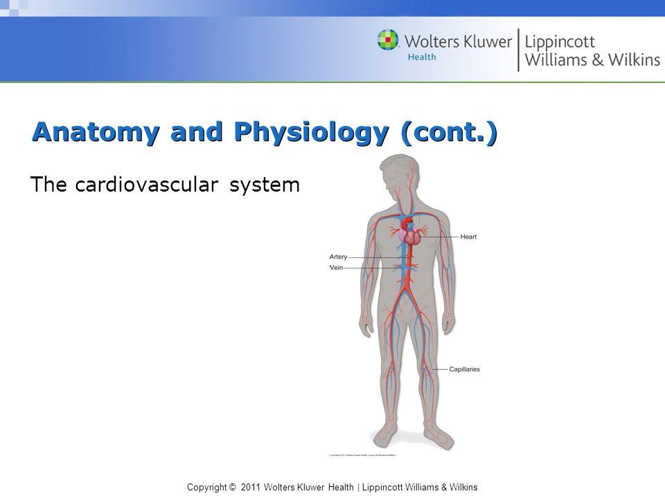 Groß Lippincott Anatomy And Physiology Ideen - Anatomie Ideen ...