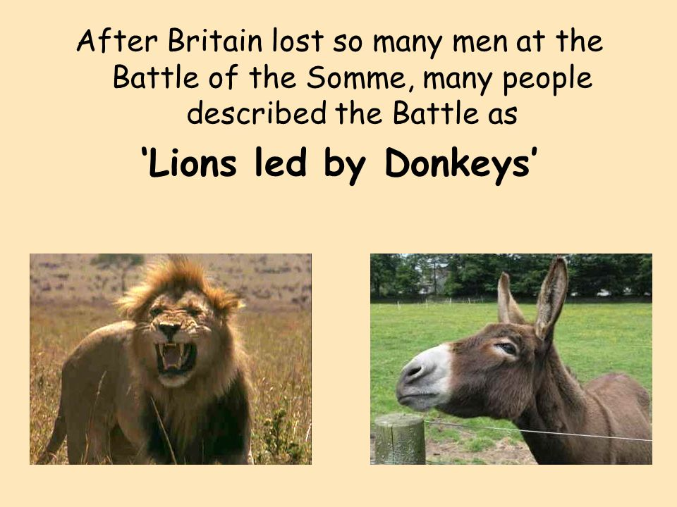 was general haig a donkey leading lions General haig general in the british army- he came up with the offensive plan for the battle of the somme seen as a donkey leading lions as so many courageous men.