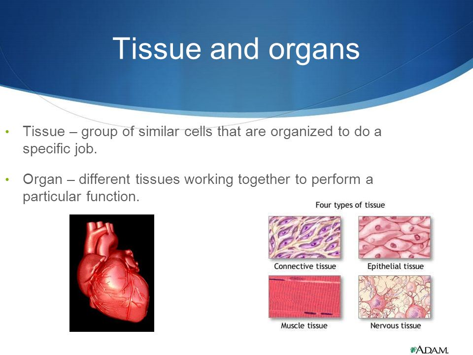 why you should be an organ tissue By: emile therien proper end of life care should include making the option of organ and tissue dona.