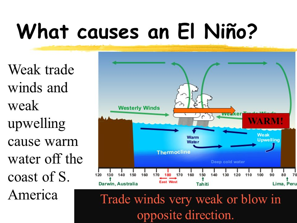 What causes an El Niño. Weak trade winds and weak upwelling cause warm water off the coast of S.
