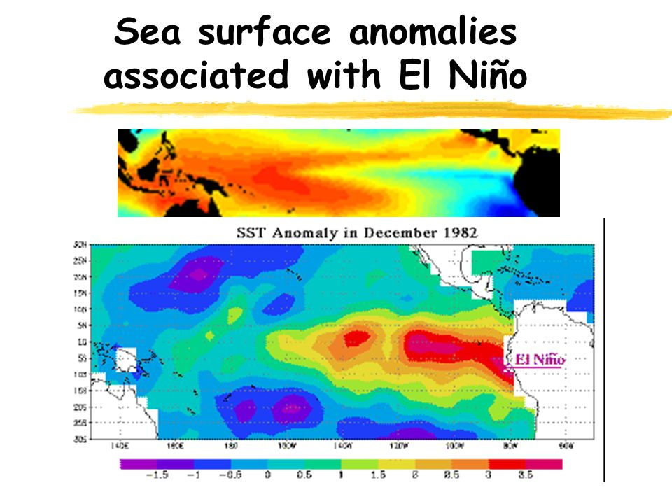 Sea surface anomalies associated with El Niño