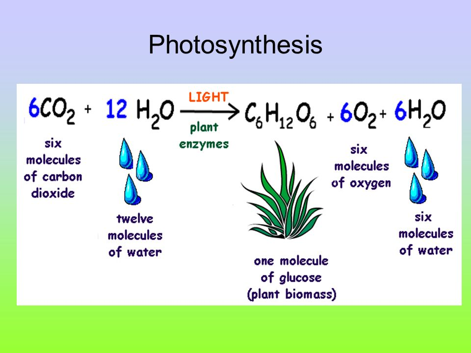 Photosynthesis paper