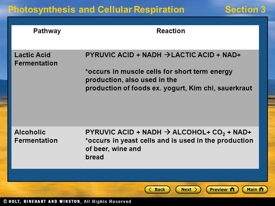 Photosynthesis and Cellular RespirationSection 3 PathwayReaction Lactic Acid Fermentation PYRUVIC ACID + NADH  LACTIC ACID + NAD+ *occurs in muscle cells for short term energy production, also used in the production of foods ex.