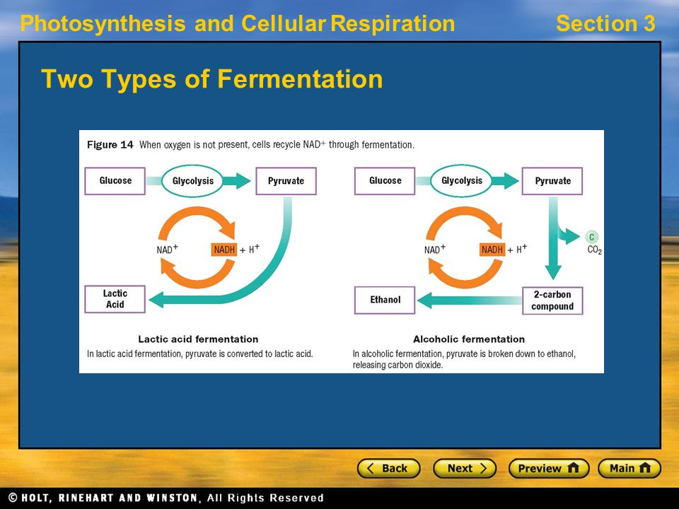 Photosynthesis and Cellular RespirationSection 3 Two Types of Fermentation