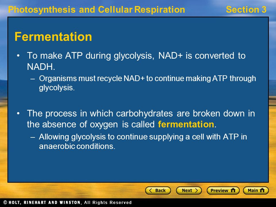 Photosynthesis and Cellular RespirationSection 3 Fermentation To make ATP during glycolysis, NAD+ is converted to NADH.