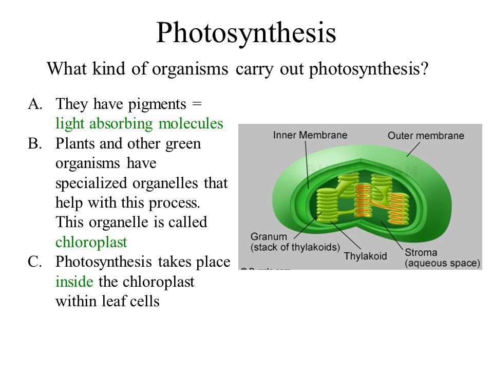 Photosynthesis What kind of organisms carry out photosynthesis.
