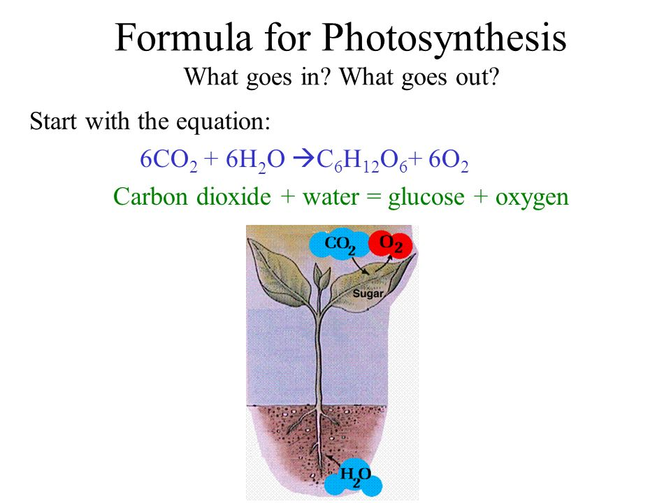 Formula for Photosynthesis What goes in. What goes out.