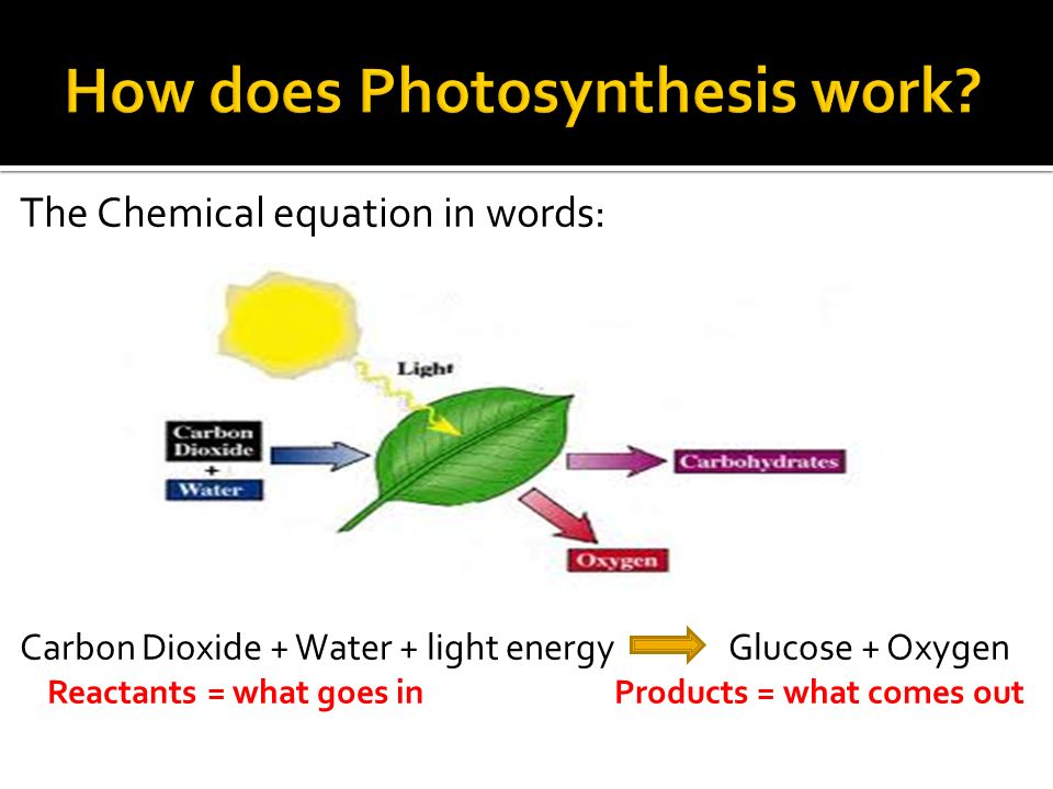 The Chemical equation in words: Carbon Dioxide + Water + light energy Glucose + Oxygen Reactants = what goes in Products = what comes out