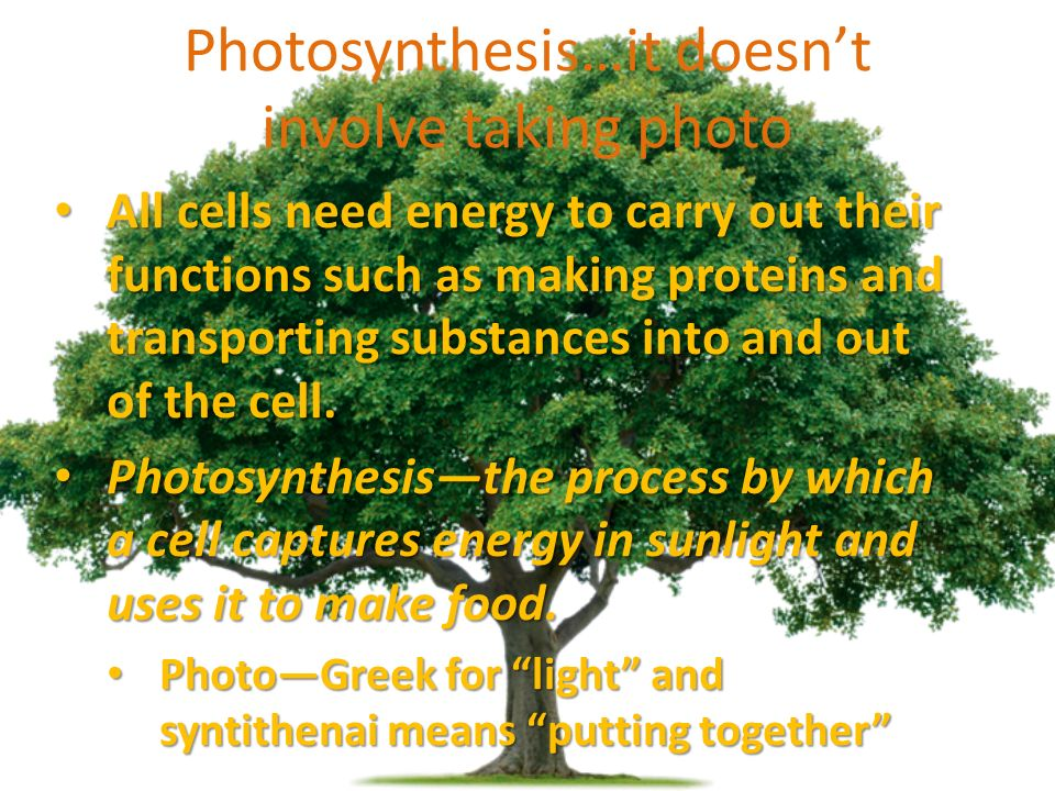 Photosynthesis…it doesn't involve taking photo All cells need energy to carry out their functions such as making proteins and transporting substances into and out of the cell.