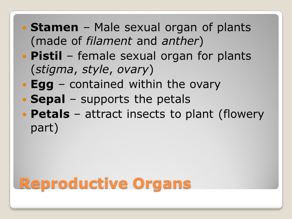 Reproductive Organs Stamen – Male sexual organ of plants (made of filament and anther) Pistil – female sexual organ for plants (stigma, style, ovary) Egg – contained within the ovary Sepal – supports the petals Petals – attract insects to plant (flowery part)