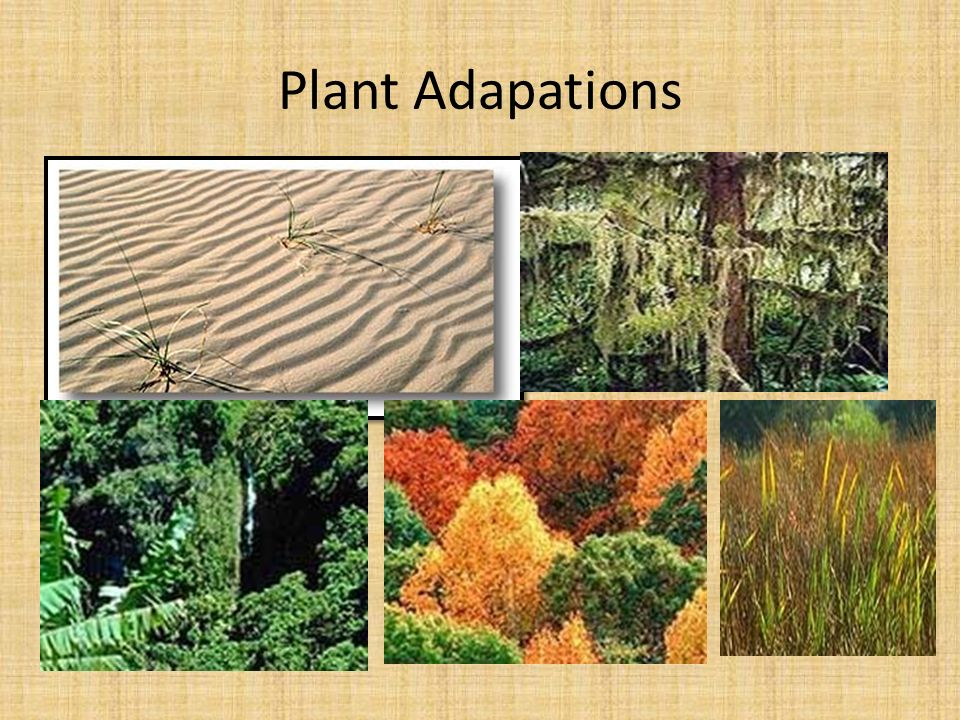 Plant Adapations