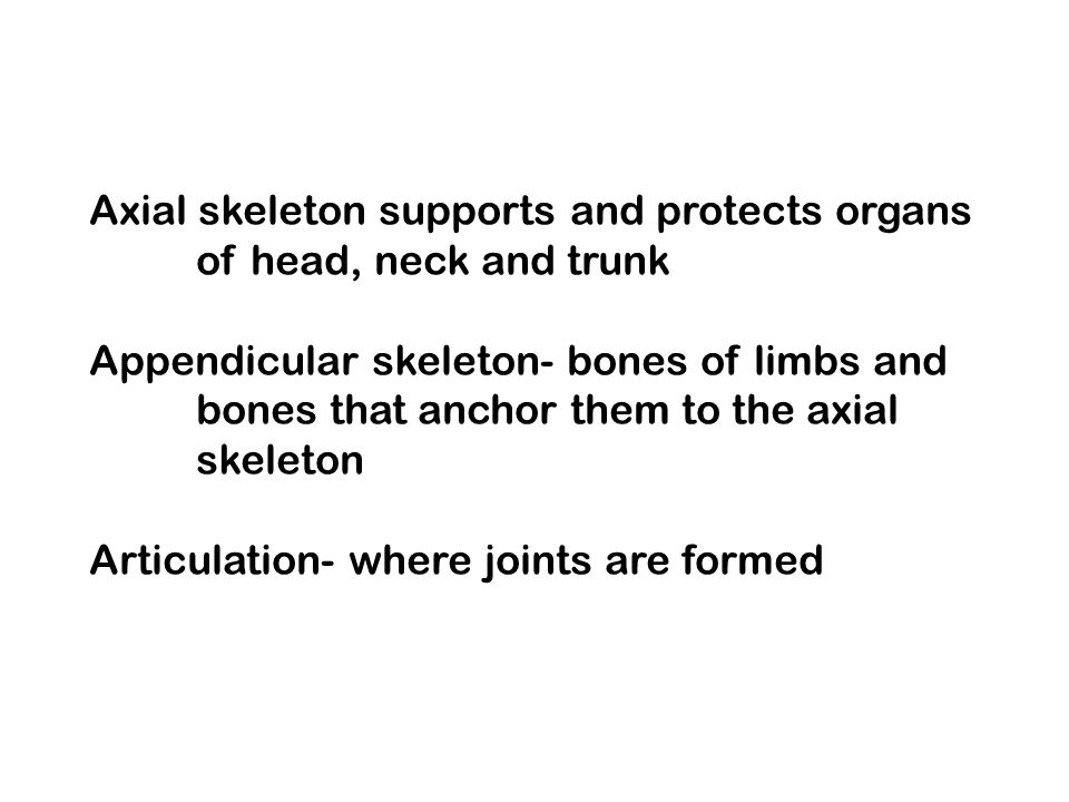 Axial skeleton supports and protects organs of head, neck and trunk Appendicular skeleton- bones of limbs and bones that anchor them to the axial skeleton Articulation- where joints are formed