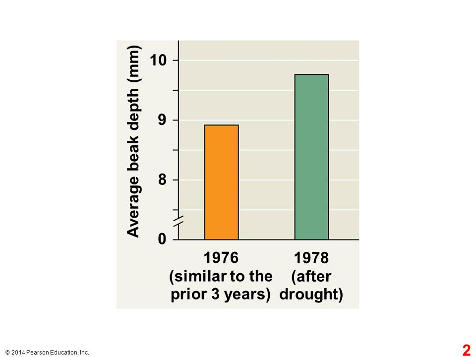 1978 (after drought) 10 1976 (similar to the prior 3 years) Average beak depth (mm) 9 8 0 2