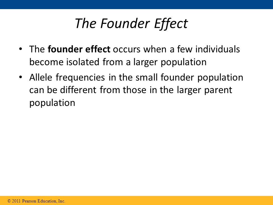 The Founder Effect The founder effect occurs when a few individuals become isolated from a larger population Allele frequencies in the small founder population can be different from those in the larger parent population © 2011 Pearson Education, Inc.