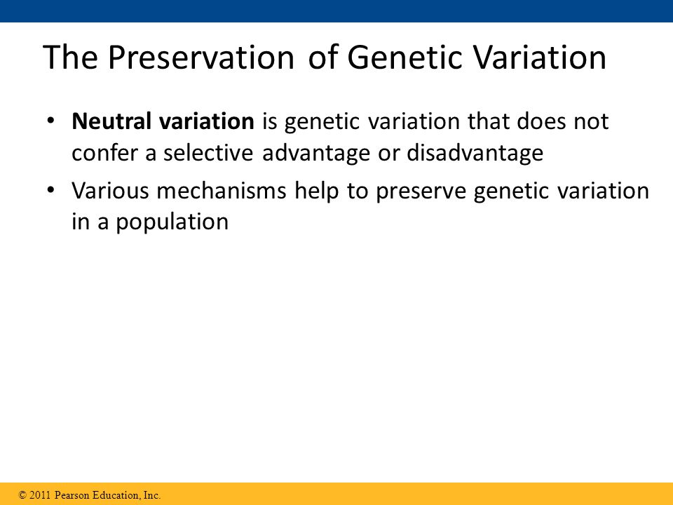 The Preservation of Genetic Variation Neutral variation is genetic variation that does not confer a selective advantage or disadvantage Various mechanisms help to preserve genetic variation in a population © 2011 Pearson Education, Inc.