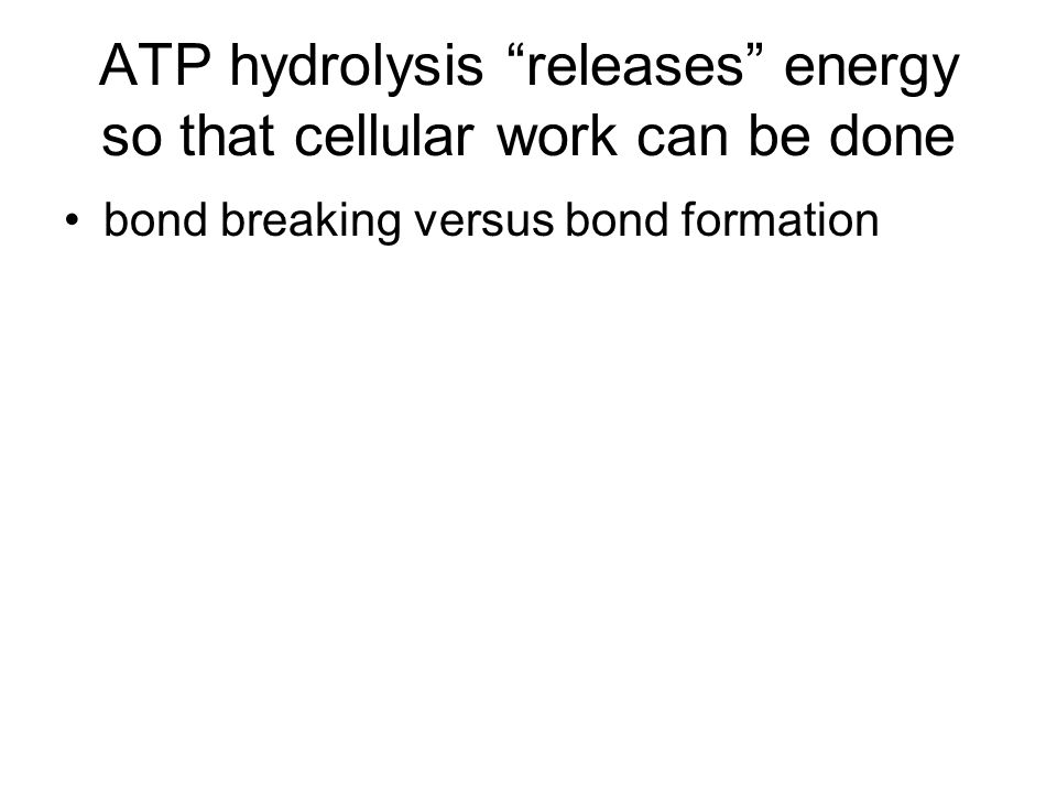 ATP hydrolysis releases energy so that cellular work can be done bond breaking versus bond formation