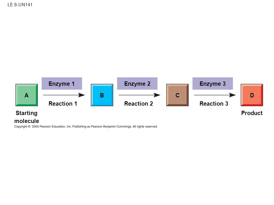 LE 8-UN141 Enzyme 1 AB Reaction 1 Enzyme 2 C Reaction 2 Enzyme 3 D Reaction 3 Product Starting molecule