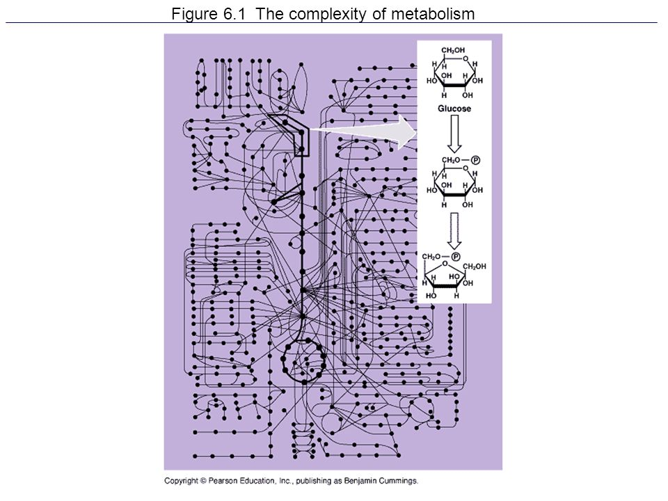 Figure 6.1 The complexity of metabolism