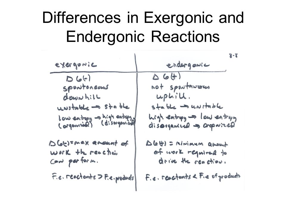 Differences in Exergonic and Endergonic Reactions