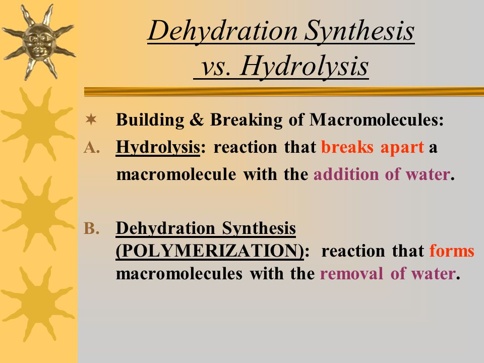Dehydration Synthesis vs. Hydrolysis  Building & Breaking of Macromolecules: A.