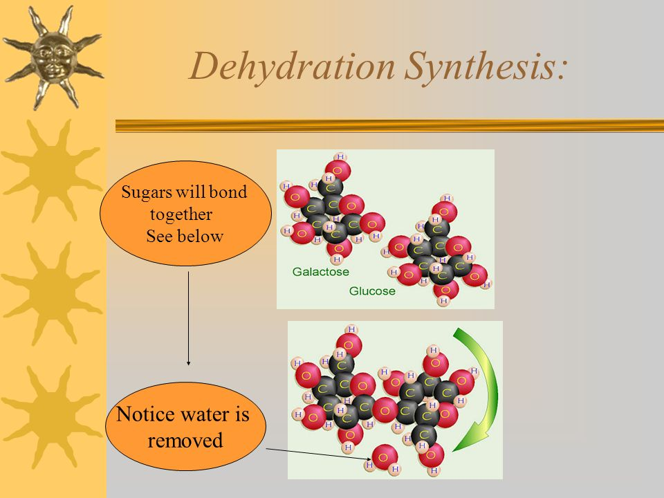 Dehydration Synthesis: Notice water is removed Sugars will bond together See below