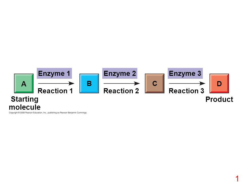 Enzyme 1Enzyme 2Enzyme 3 D CB A Reaction 1Reaction 3Reaction 2 Starting molecule Product 1