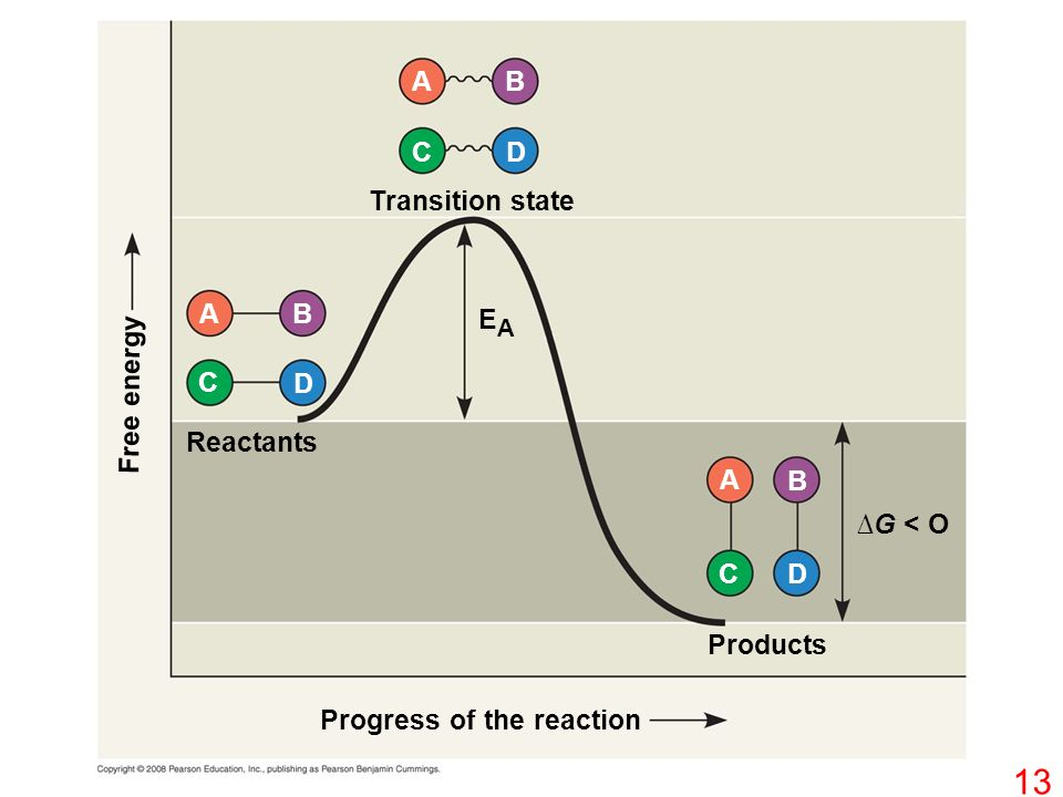 Progress of the reaction Products Reactants ∆G < O Transition state Free energy EAEA DC BA D D C C B B A A 13