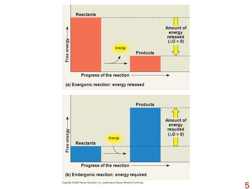 Reactants Energy Free energy Products Amount of energy released (∆G < 0) Progress of the reaction (a) Exergonic reaction: energy released Products Reactants Energy Free energy Amount of energy required (∆G > 0) (b) Endergonic reaction: energy required Progress of the reaction 5