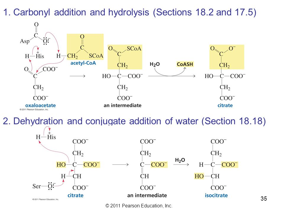 © 2011 Pearson Education, Inc. 35 1. Carbonyl addition and hydrolysis (Sections 18.2 and 17.5) 2.