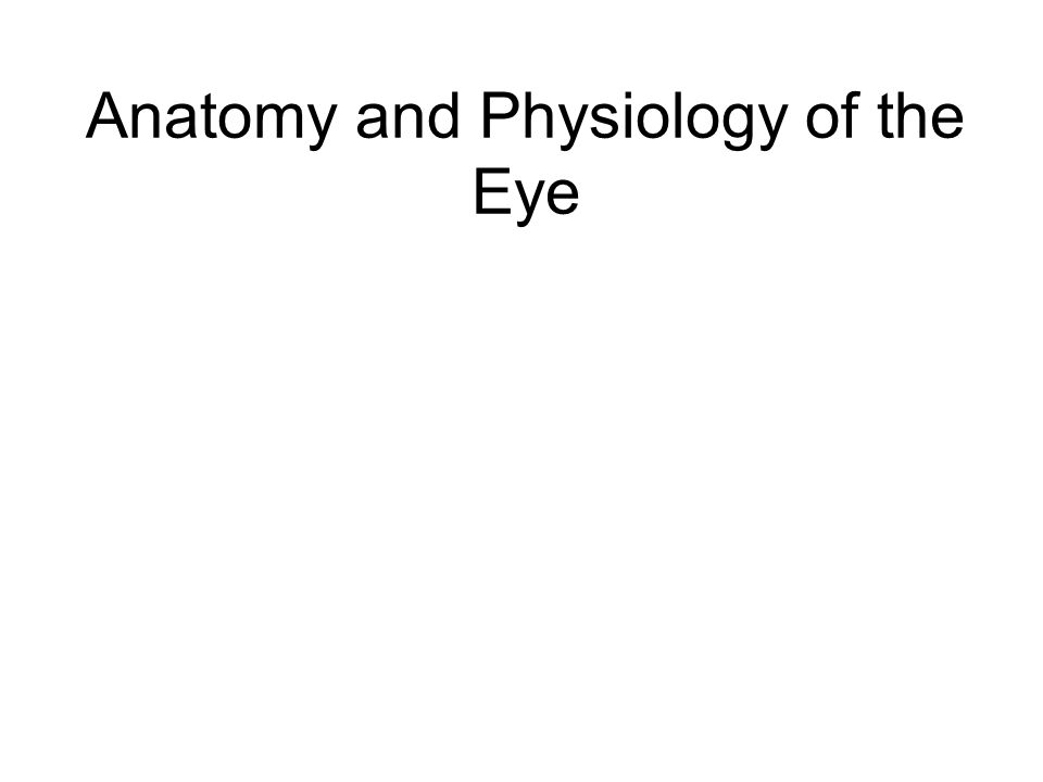 Anatomy and Physiology of the Eye. How does the eye detect light and ...