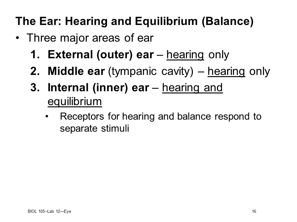 BIOL 105Lab 12 Eye 1 The Eye and Vision Most of eye protected by – The Ear Hearing and Balance Worksheet
