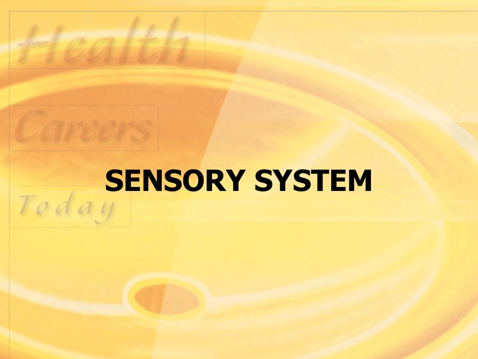 Sensory System Structure And Function Sensory System Consists Of