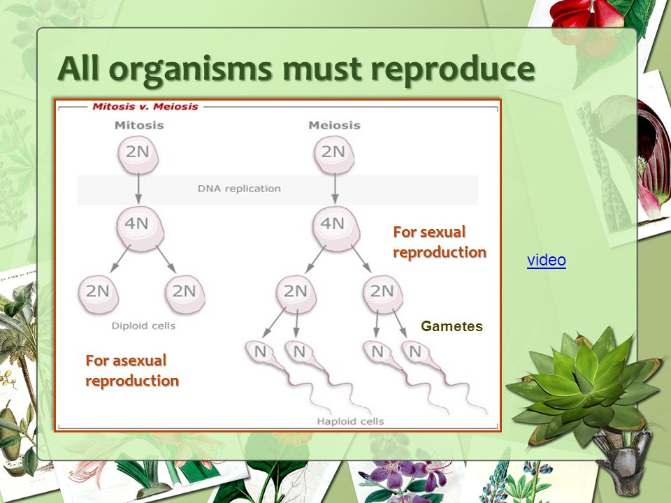 All organisms must reproduce For sexual reproduction For asexual reproduction Gametes video