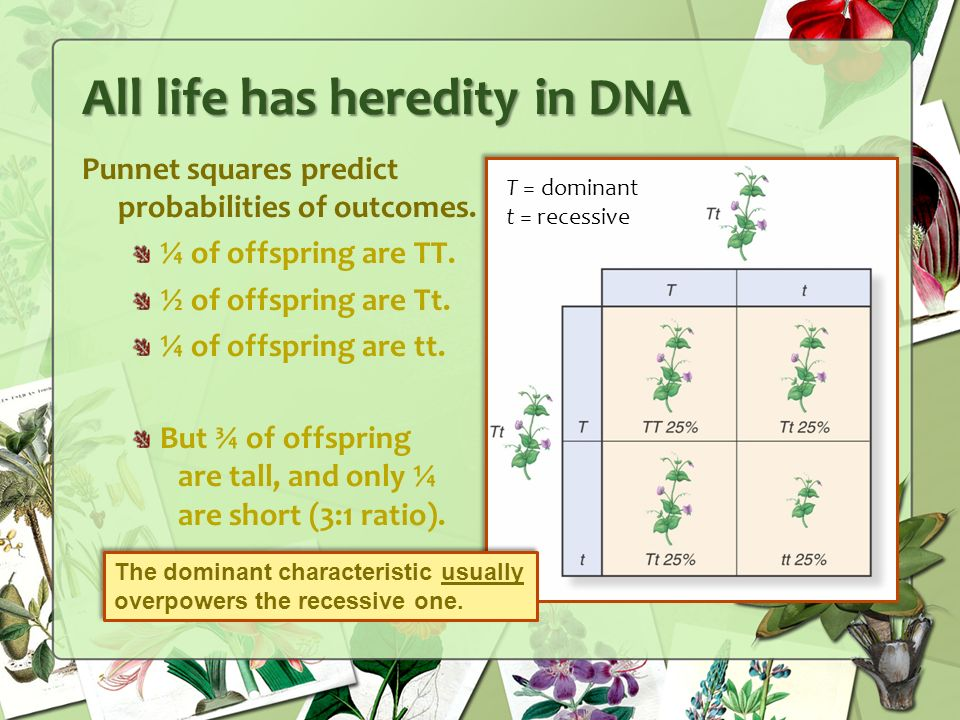 All life has heredity in DNA Punnet squares predict probabilities of outcomes.