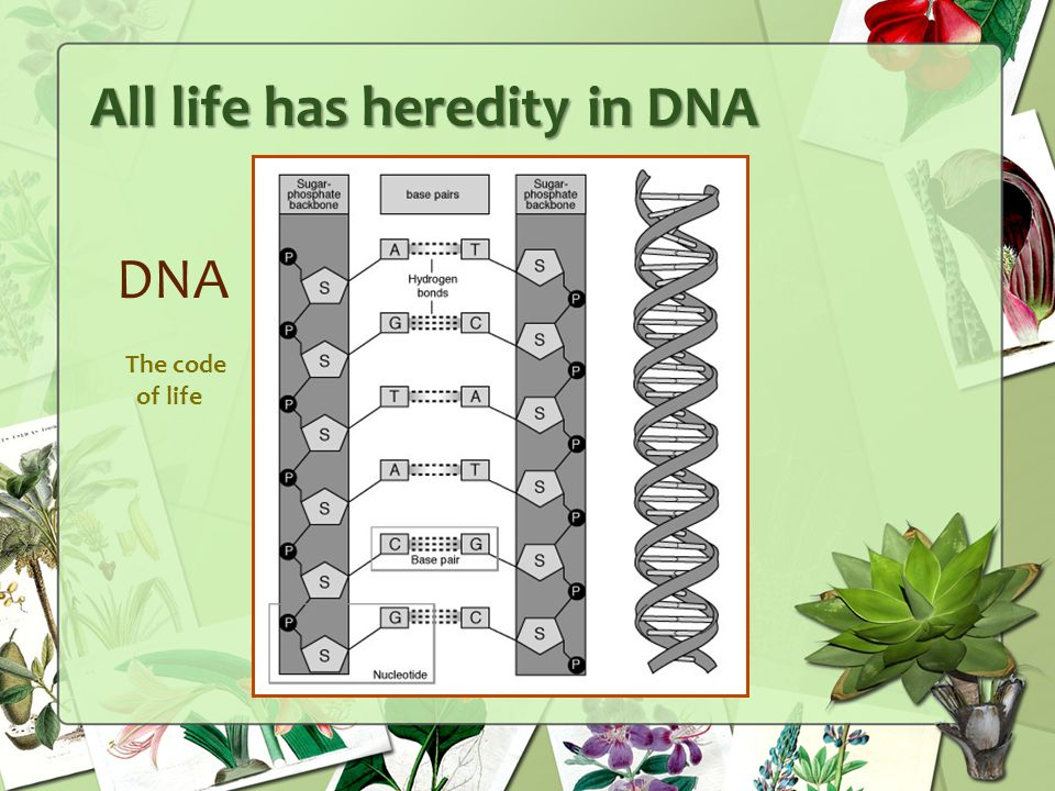 All life has heredity in DNA DNA The code of life
