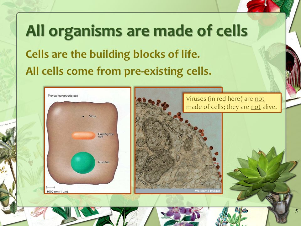 Cells are the building blocks of life. All cells come from pre-existing cells.
