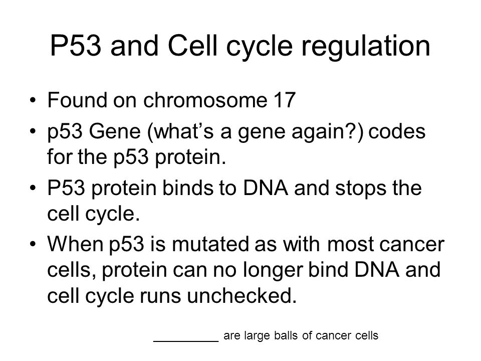 P53 and Cell cycle regulation Found on chromosome 17 p53 Gene (what's a gene again ) codes for the p53 protein.