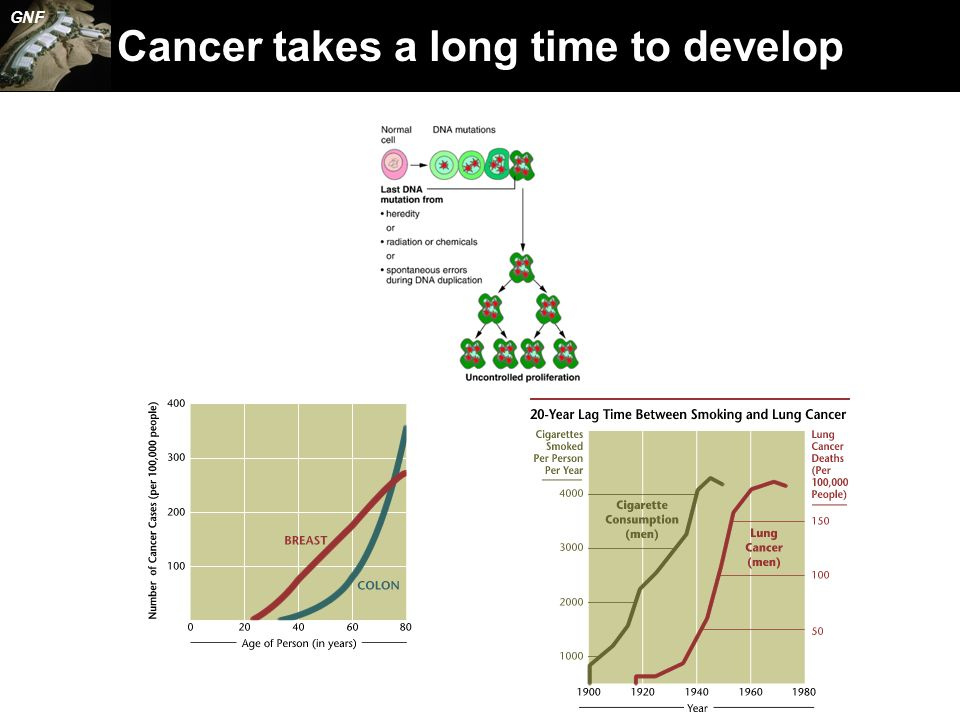 Cancer takes a long time to develop GNF