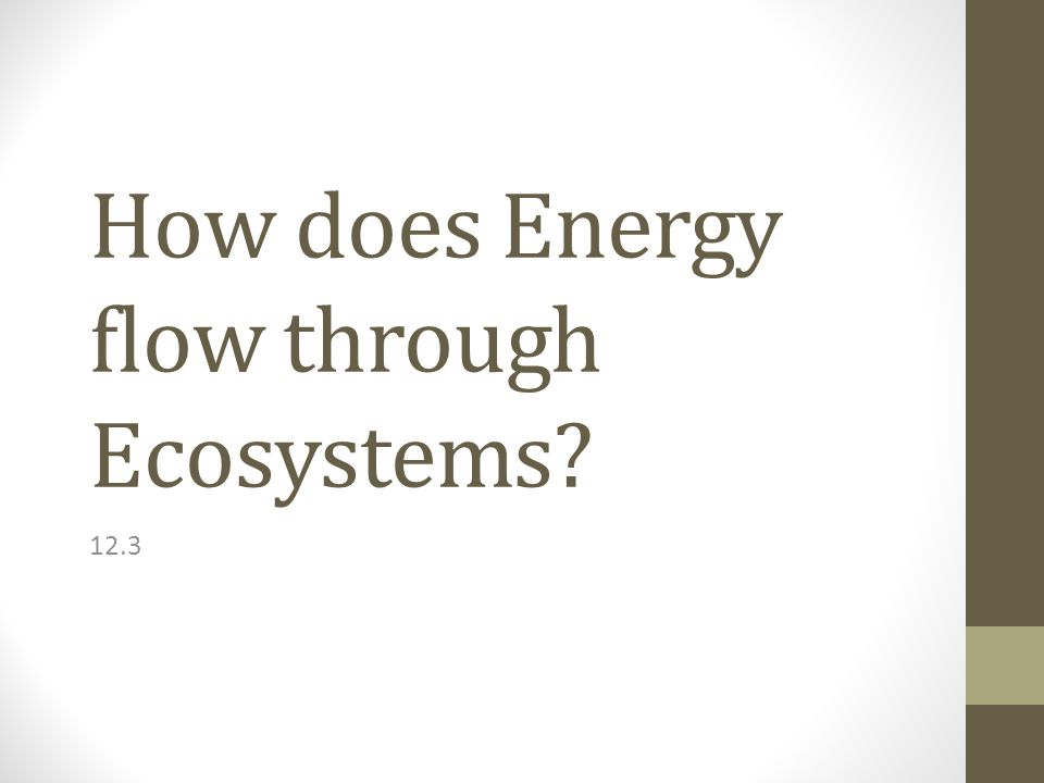 How does Energy flow through Ecosystems 12.3